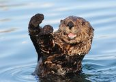 14 Surprising Facts About Sea Otters