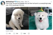 Heartwarming Doggo Rates From WeRateDogs