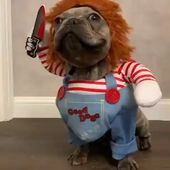Chucky Dog Costume – Best Costumes for Small Dogs