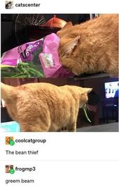 Enjoy A Lazy Caturday With Fresh Cat Memes
