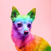 Animals: The Magnificent Rainbow Makeover Edition