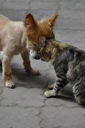 "PetsLady's Pick: Cute Cat And Dog ""Hug"" Of The Day"