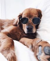 National Relaxation Day: 6 Ways To Chill With Your Dog – DogTime