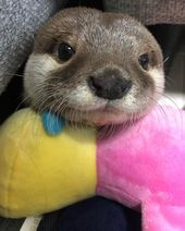 60 Baby otter pictures that will have you smiling on the gloomiest day