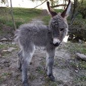 These 30 Cute Baby Donkeys Are Everything You Need To See Today