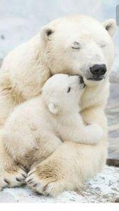 11 Pure Photos of Polar Bears For Good Feels