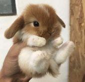 30+Adorable Bunnies toPut You inthe Easter Spirit