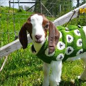 Goats Are The Hottest New Pet To Show Off On Instagram