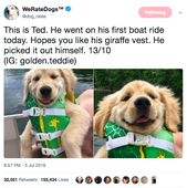 Here Are The 20 Best Pupper Posts Of The Week