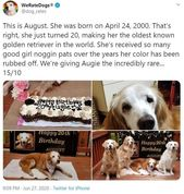 Most Wholesome Dog Rates Of 2020 (75 Rates)