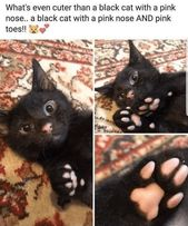32 Insanely Purrfect Cat Memes To Ring In Caturday The Right Way