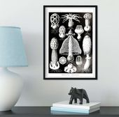 Art Forms in Nature graphic scientific Mushroom print – A4 Framed White